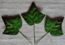 GREEN IVY LEAVES (34mm) Mulberry Paper leaves